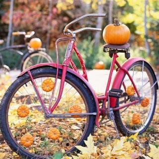 5790bbfca52e1f35f7a727d89bc052d7--mini-pumpkins-fall-pumpkins