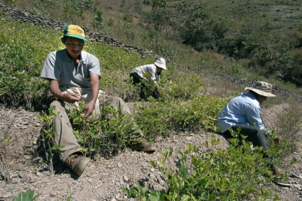 web-bolivia-coca-shutterstock_73382362-africa924-ai